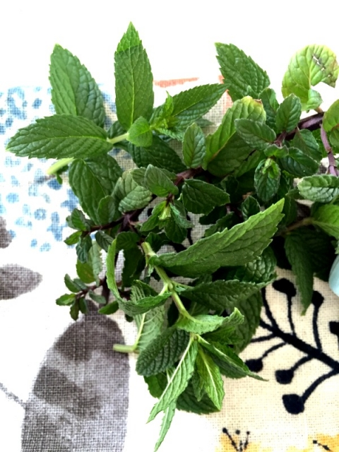 Fresh mint for famous mint iced coffee!!